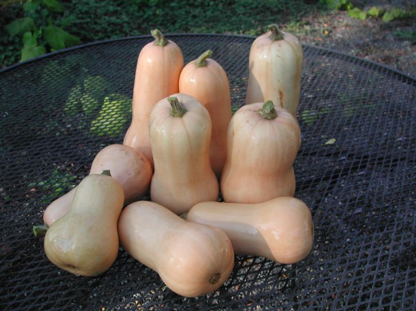 Waltham Butternut--hopefully, they'll be on the list soon