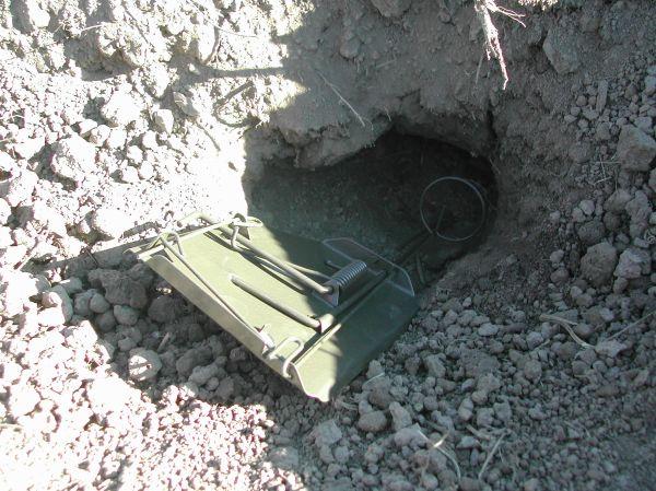 Gopher Cinch trap