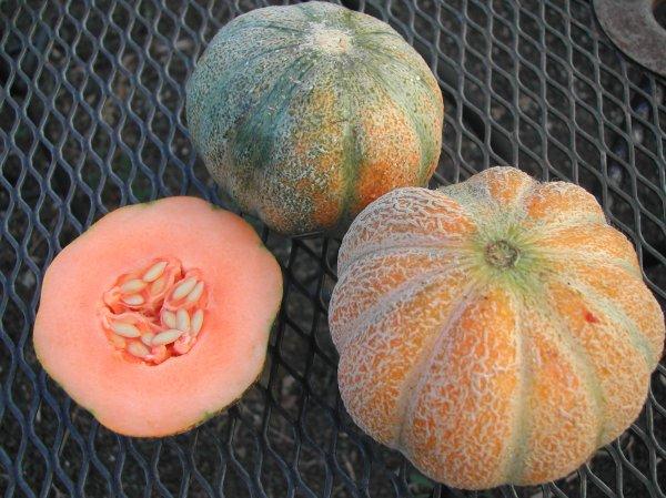 Emerald Gem melons