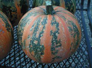 A Kakai Hulless pumpkin