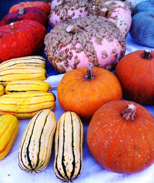 It was a good winter squash year, photo by Beth R.