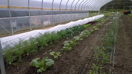 Crops in the new hoop house