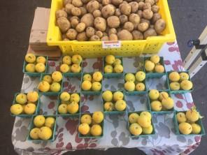 Shiro plums at the Kenton Farmers Market