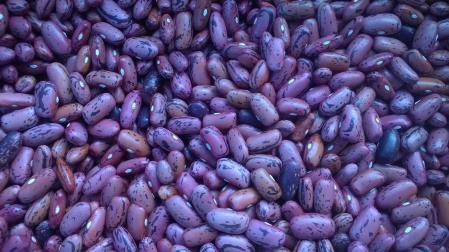 Rosso di Lucca beans