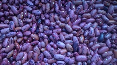 Rosso di Lucca beans